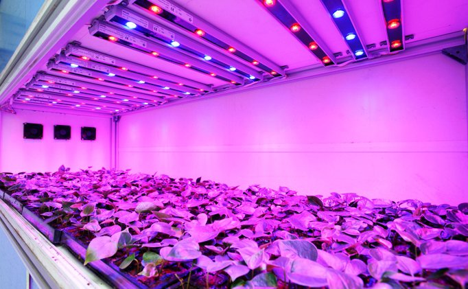 Things before buying grow lights