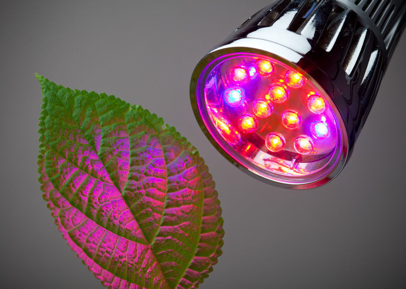 guide to buy LED grow lights