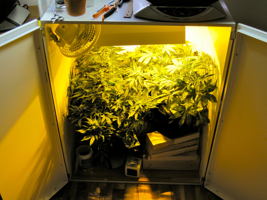 15 Best List Of Cheap Grow Tents December 2019 Top
