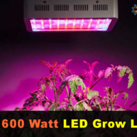 Best 600 Watt LED Grow Lights Review